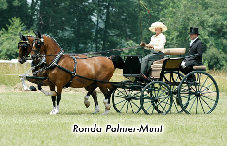 Ronda Palmer-Munt
